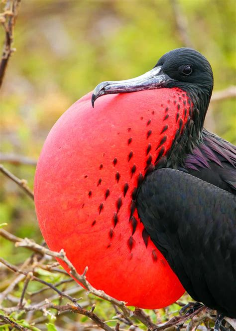 17 of the Weirdest Birds in the World (Photos, Facts ...