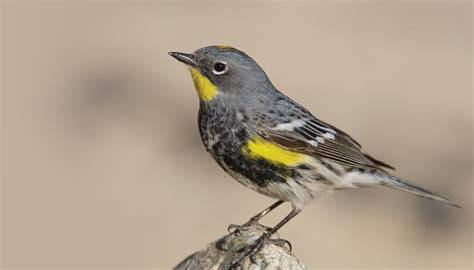 Backyard Bird Shop Locations by Warblers Birds Unlimited Birds Unlimited