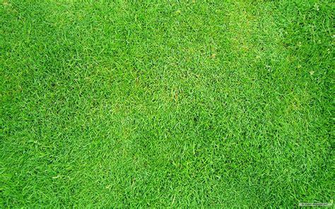 free-grass-wallpaper-1 - Mini Garden Makeovers