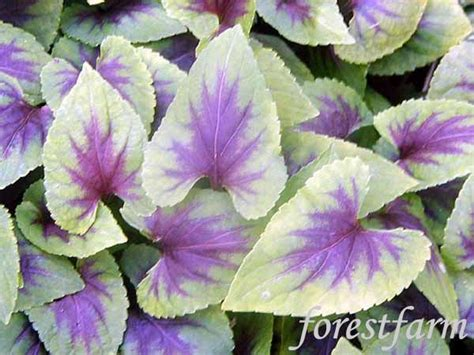 perennial flowers zone 5 zone 5 perennials google search zone 5 garden pinterest