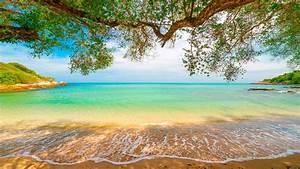 Tropical, Sand, Beach, Lagoon, Coastline, Sea, Waves, Turquoise, Water, Trees, Willow, Overhanged, Horizon