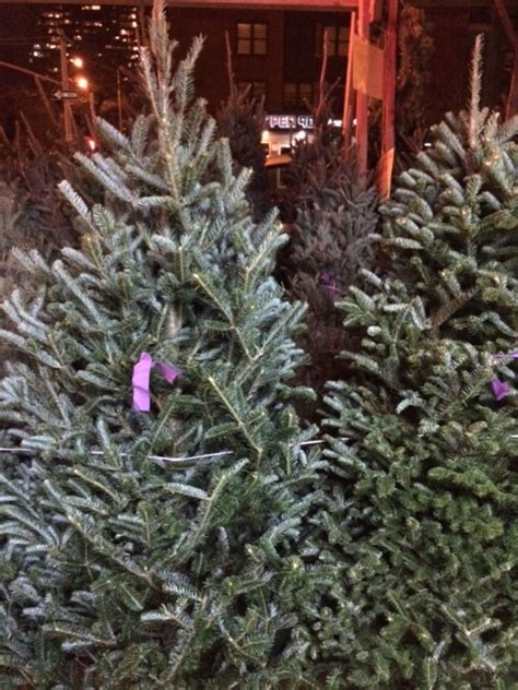 where to buy the best christmas trees in new york city