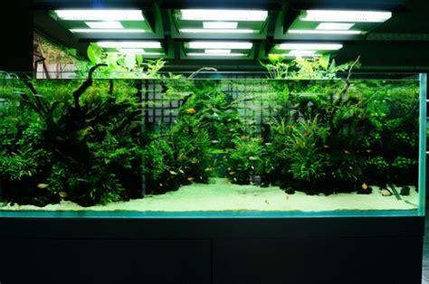 nature aquarium aquascaping planted aquariums aqua