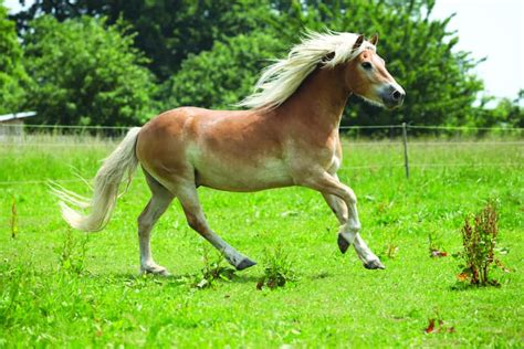 pony breed breeds guide ultimate magazine ponymag