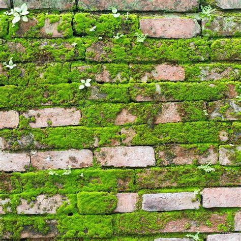 moos steinen entfernen moos entfernen die besten mittel f 252 r balkon und garten
