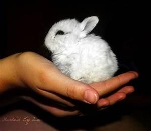 newborn rabbit by stardustbyzali on deviantART
