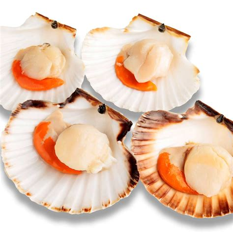 cuisine coquilles jacques coquille jacques recettes de coquille
