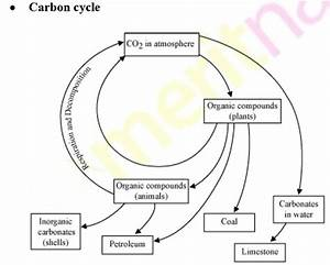 Diagram Of Carbon Cycle