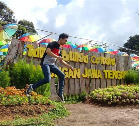 keindahan taman bunga celosia wisata hits bandungan