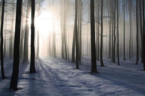 deco porte chambre foret d 39 hiver décoration murale tableau nature en hiver