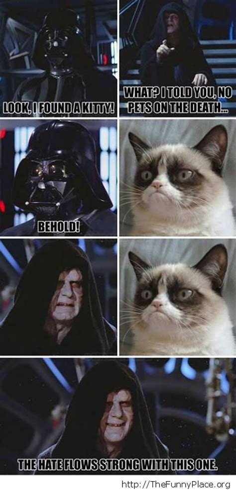 funny grumpy cat thefunnyplace