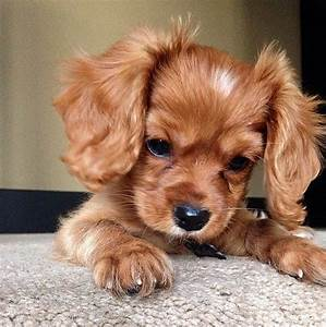 7 Places to Puppy Proof Your Home - PEDIGREE Foundation  Cutest