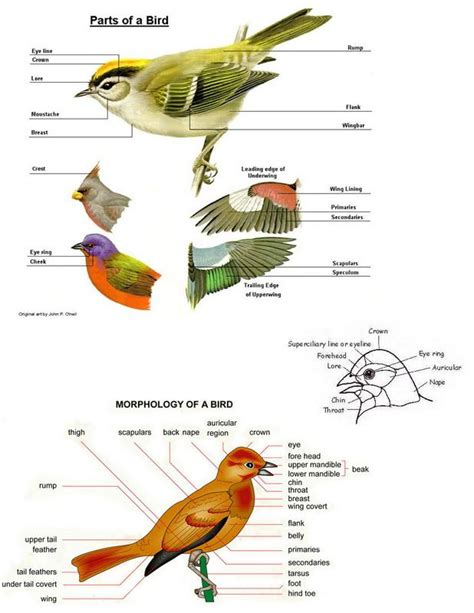 parrot body parts images reverse search