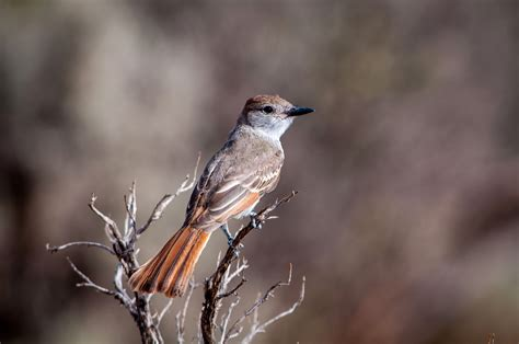 Bird Fe bird on branch in santa fe new mexico image free stock