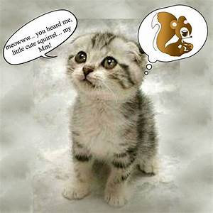 HyunMin GFORCE: The Lost Kitten...