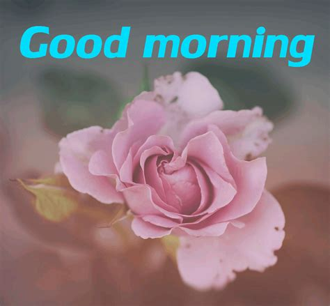 beautiful good morning gif images lovely quotes