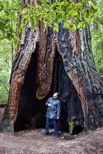 Le roi des arbres | Nota Bene | Le blog officiel de Eugène ...