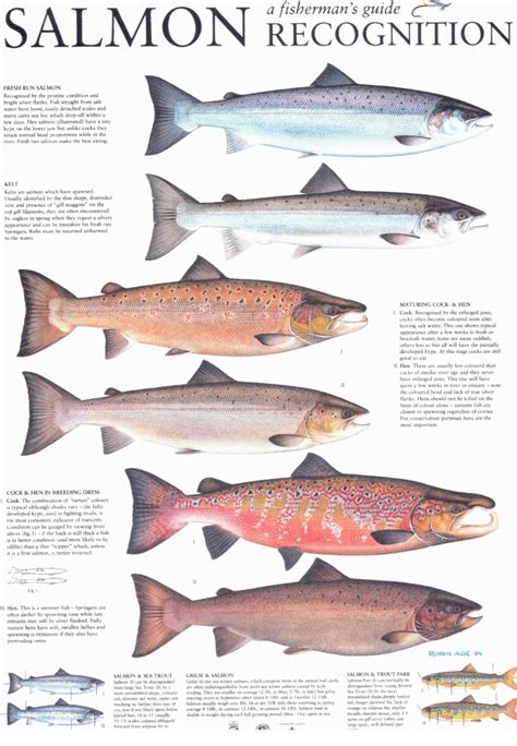 types of salmon dalguise fishings tackle advice