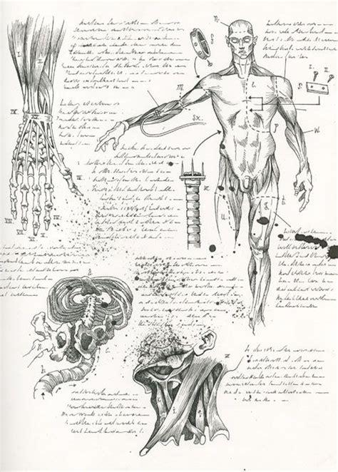 medical diagrams images  pinterest human