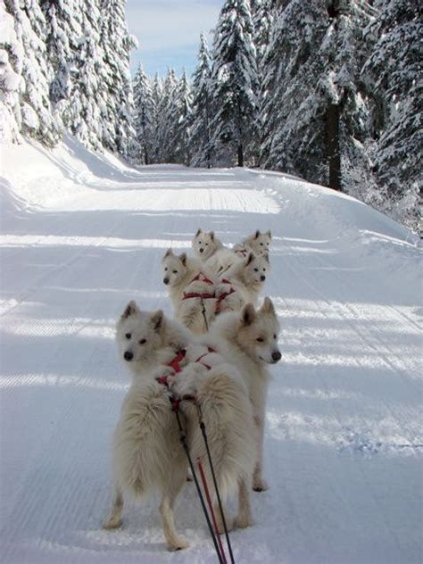 Sled Dog Central Fun Photos Page 44