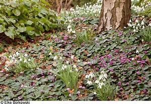 Blumen Für Schattige Plätze : pflanzen f r tr ge pflanzen und tr ge balkonkasten mit ~ Michelbontemps.com Haus und Dekorationen