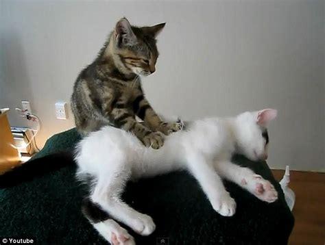 Kusky Kurimu And Zafiro Some Common Cats Behavior Part Ii