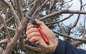 Bäume Schneiden Wann : sommerschnitt wann sie b ume schneiden sollten ~ Lizthompson.info Haus und Dekorationen