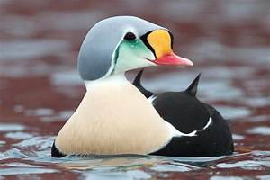 10 Ways to Protect Ducks - Bird Conservation