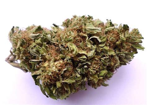 indoor hydro strains learn growing marijuana