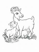 Goat Billy Gruff Goats Coloring Drawing Three Drawings Getdrawings Printable Getcolorings Paintingvalley sketch template