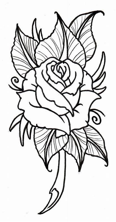 Tattoo Rose Roses Designs Tattoos Drawing Cool