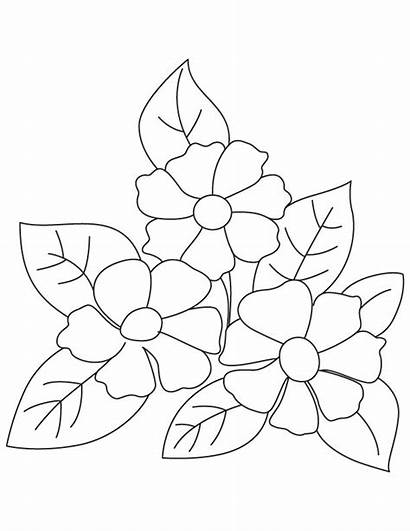 Coloring Camellia Flowers Flower Printable Sheets Fruit