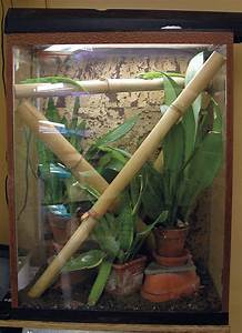 Caring For Giant Day Geckos