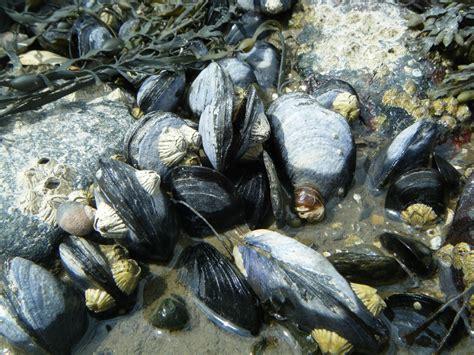 Lava L Fish Tank Walmart by Mussels Underwater