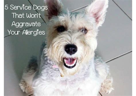 hypoallergenic dog breeds  service
