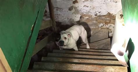 New Homeowner Finds Dog In Basement  Dog's Reaction Is