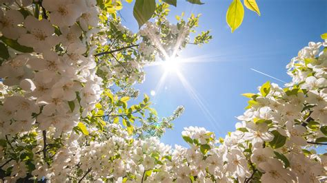 spring wallpapers high quality