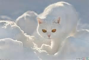 snow cat wallpaper 432 open walls