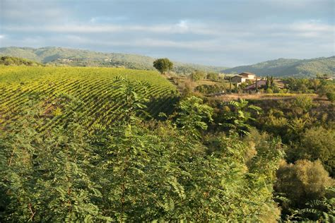 best wineries in chianti the best of chianti classico tour with three