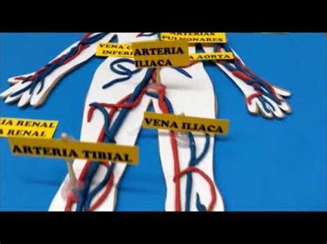 maqueta sistema circulatorio humano khe maqueta sistema circulatorio humano y sus partes youtube