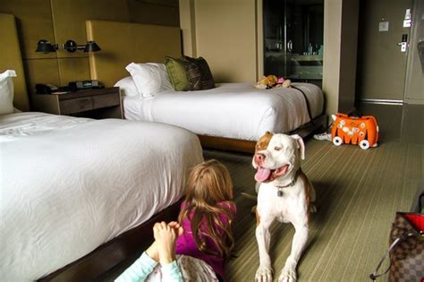 10 reasons to stay at hotel la jolla with dogs pet