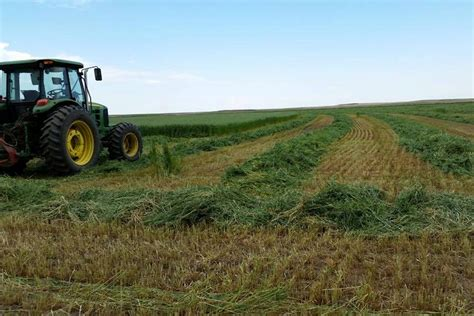 Rodeo Standings by Forage 2017 To Hay Or To Harvest That Is The Question