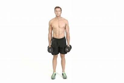Curl Hammer Cross Exercises Muscle Dumbbells Mass
