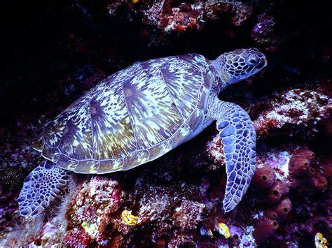 stock photo  animal ocean reptile