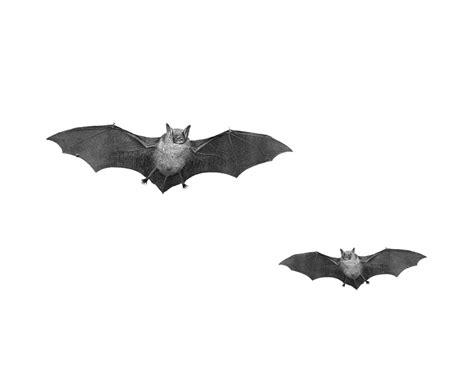 bat png transparent images png all