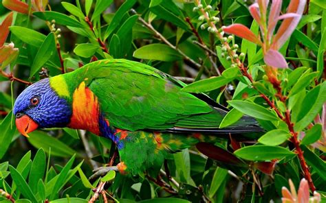 Wallpaper Animals And Birds - maccow in jungle hd animals and birds wallpapers for