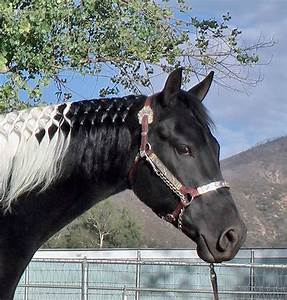 Black Paint Horse Pictures