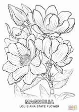 Larkspur Drawing Flower Coloring Getdrawings sketch template
