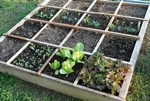 Better for planting square foot gardening vs row for Square gardening