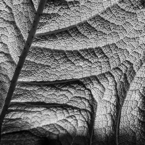Abstract Black And White Photography Nature by Images Gratuites Arbre La Nature Branche Abstrait
